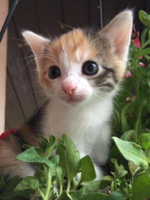 ❤ 5 koťátek - 4 kočičky, 1 kocourek ❤ - ADOPTOVANÁ