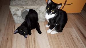 Nejroztomilejší kočičí sourozenci hledají společný domov