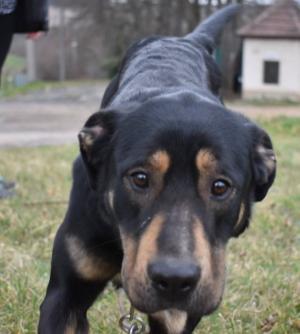 DENNY - Hledáme páníčka, který rozumím psí duši ❤ - ADOPTOVANÝ