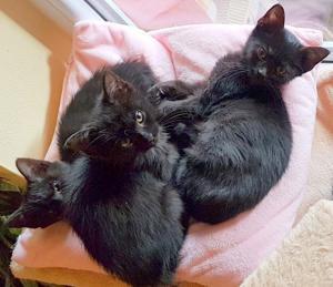 CAMERON, DREW (adoptovaná) a LUCY (adoptovaná) ❤