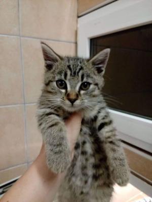 Kočička 4 měsíce hledá domov