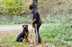 AKUTNÍ SOS ❤ ARON ❤ - Poslušný a vychovaný pes