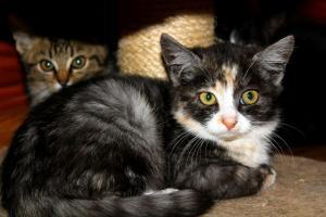 KOŤÁTKA - kočičky i kocourci - zemřela jim maminka :(