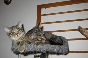 Mourovatá koťátka z Prahy