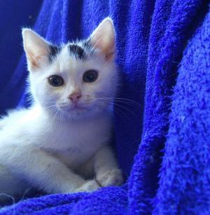 ❤ Malinká kočička jménem CVRČEK ❤