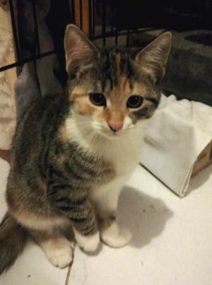Koťátko MABEL hledá skvělé lidičky :-) - ADOPTOVANÁ