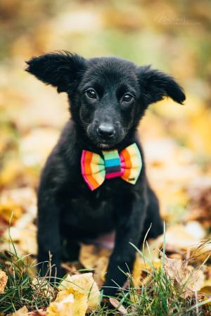 Frutti - veselá kamarádka do každé rodiny - adoptovaná
