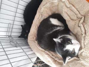 Nádherní kočičí sourozenci hledají domov