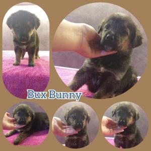 BuxBunny