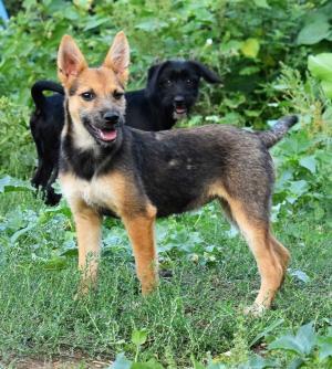 ❤ HERA ❤ Dlouhonohé rozkošné štěně v kožíšku mini ovčáka