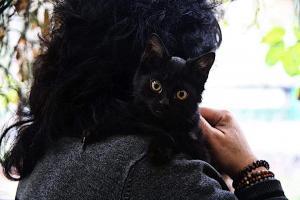 ŽOFINKA - kočička 4 měsíce - ADOPTOVANÁ