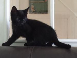 3 měsíční černá kočička