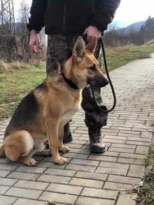 JOEY - Nádherný statný pes ❤