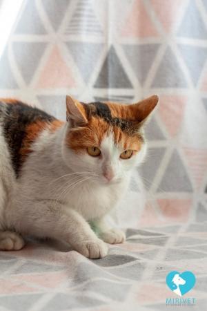 Kočička Šarlotka