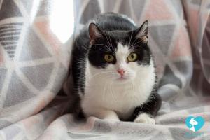 Kočička Ella