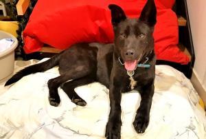 JACK - Inteligentní, učenlivý, přátelský a moc hodný mladinký pes