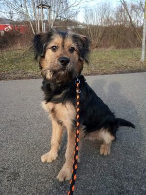 DARK - Umazlený akční pes s kukučem rošťáka ❤