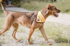 ASHA - Zrzavá, roztomilá, přátelská, milující lidi i psy ❤