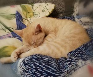 ❤ Zrzka MANON - Vhodná k jiným kočkám, psům, je klidná, něžná, láskyplná, prostě SKVĚLÁ