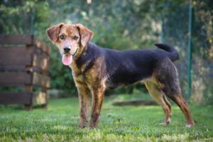 ❤ ŠÁRKA - Temperamentní mladinká psí slečna hledá aktivní rodinu
