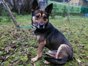 ALVIN - kříženec 15 kg - kastrovaný pes 1,5 roku
