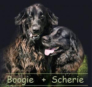 Scherie a Boogie