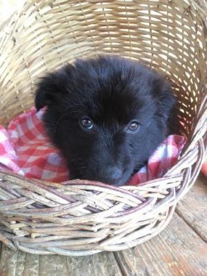 MATÝSEK - Rozkošné, kouzelné, sladké, miloučké, prostě štěně ❤ - ADOPTOVANÝ