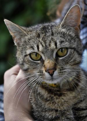 Jantarová kočička - ADOPTOVANÁ
