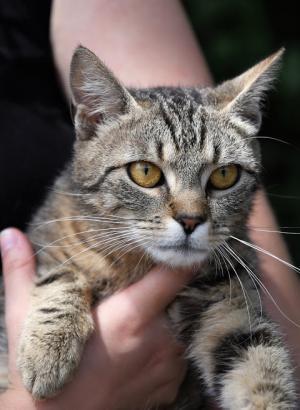 Medová kočička - ADOPTOVANÁ