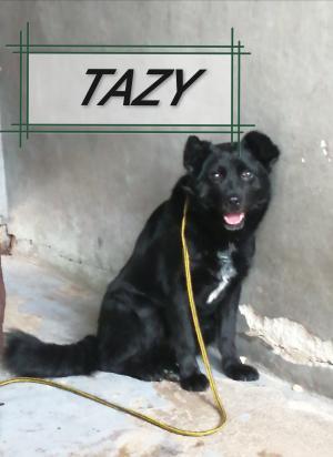 ♥ Tazy ♥