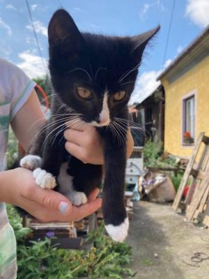 JANTARKA a Jasmínka ( adoptovaná ) - Krásná mazlivá koťátka hledají zodpovědné domovy ❤