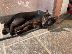 BLEKYNKA a Želvinka ( adoptovaná ) - Roztomilá koťátka hledají zodpovědné domovy ❤