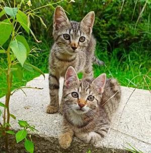 ❤️ Kočičí sestřičky k adopci ❤️