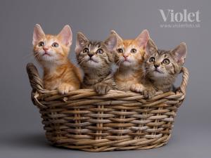 Athos, Porthos, Aramis, Alexa a Anka