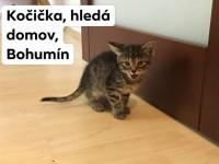 Zachráněná koťátka hledají nový domov - Bohumín