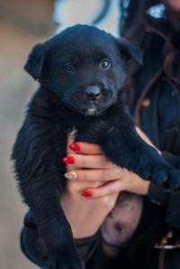 Leandro psík hľadá domov